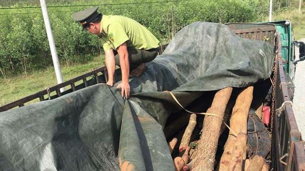 Gia Lai: Bắt giữ gần 50m3 gỗ không rõ nguồn gốc tại huyện Kong Chro