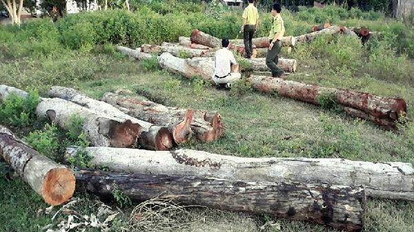 Cảnh sát môi trường phát hiện gần 13m3 gỗ vắng chủ
