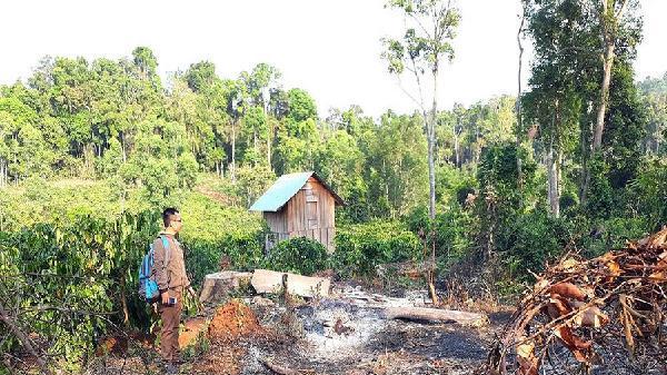 Gia Lai: Khó giải tỏa đất rừng bị lấn chiếm