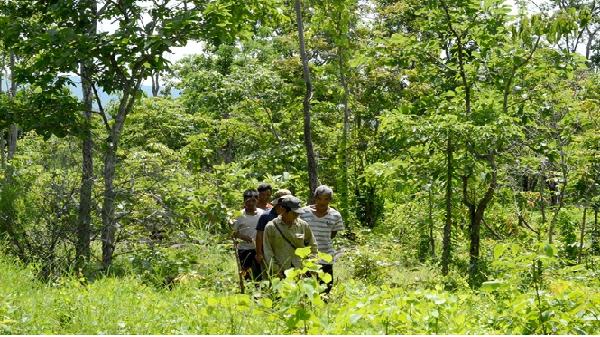 Giữ rừng là giữ mái nhà rông của làng