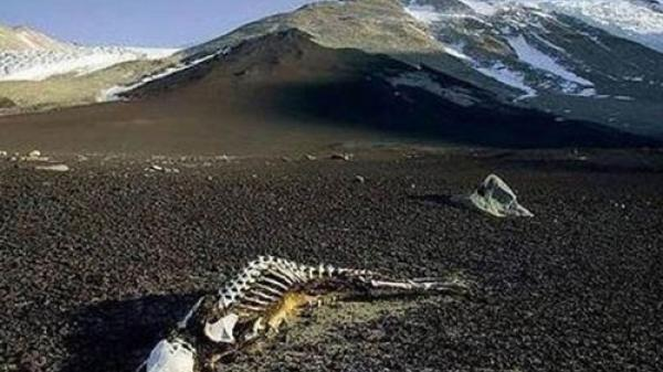 Bí ẩn thung lũng xác chết, đi vào là chết khô đau đớn