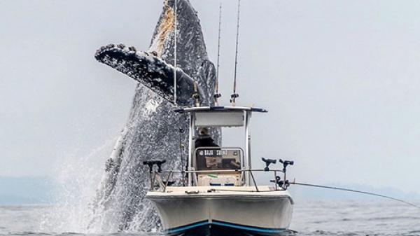 'Nghẹt thở' khoảnh khắc cá voi khổng lồ xuất hiện như vị thần