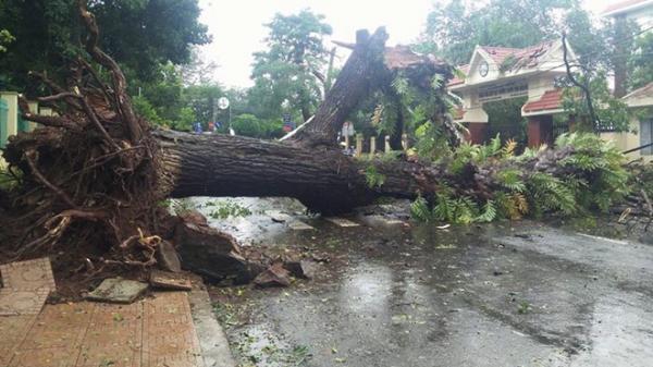 Bão số 12 - Damrey quét qua Tây Nguyên, cây ngã đè người đi đường