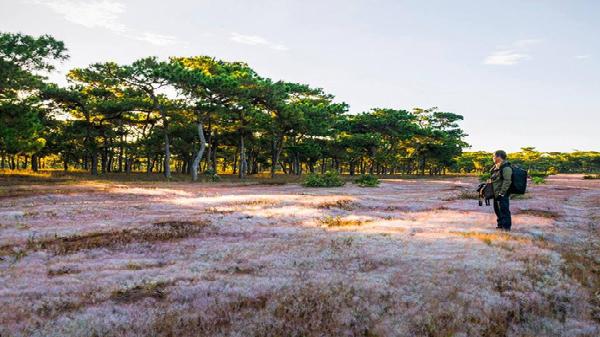 Đồi cỏ hồng mới ở Gia Lai khiến 'dân sổng ảo' phải xuýt xoa không ngớt