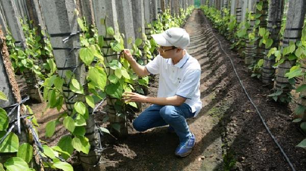 Internet cải thiện cuộc sống ở nông trại tiêu biệt lập giữa rừng