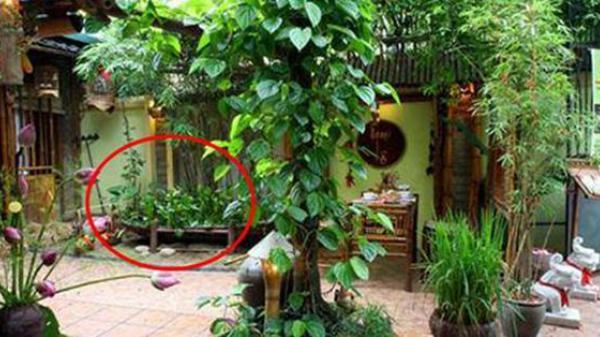 Bộ Y tế khuyến cáo: 8 loại cây quen thuộc độc hơn lá ngón, nhấm vào là tắc thở, không nên trồng trong nhà