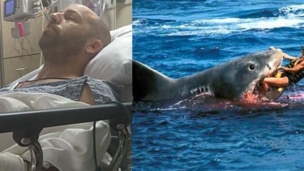 Thoát khỏi hàm răng cá mập, không lâu sau, anh phát hiện ra chính con cá đã cứu anh 1 mạng
