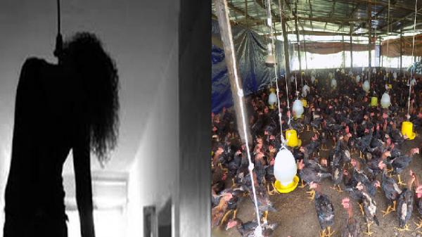 Miền Tây: Bàng hoàng phát hiện cô giáo treo cổ tự tử trong chuồng gà