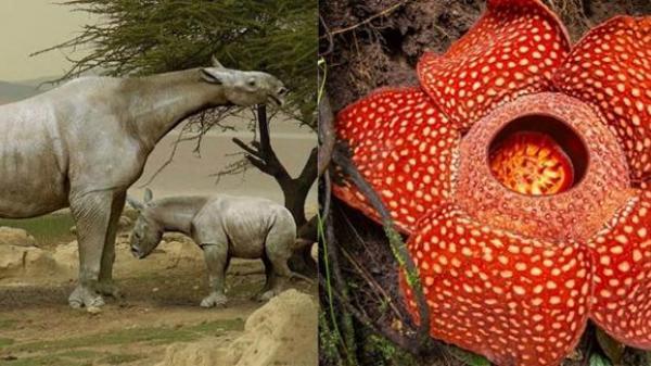 16 loài sinh vật khổng lồ xuất hiện trên Trái Đất, số 9 xuất hiện nhiều ở Việt Nam