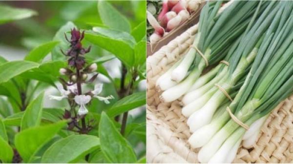 Bất ngờ những loại rau quen thuộc chữa khỏi những bệnh nguy hiểm vô cùng hiệu quả