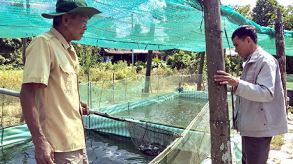 Hậu Giang: Sôi động thị trường cá giống mùa lũ
