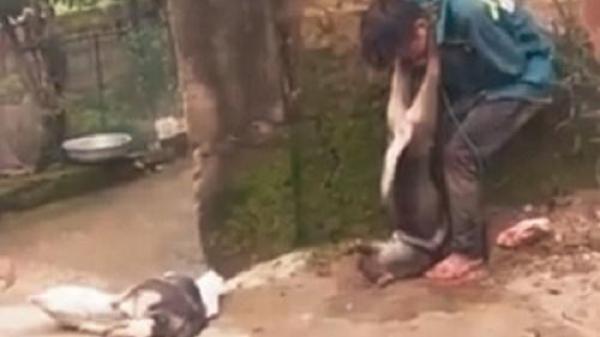 Đánh bả trộm chó, tên 'cẩu tặc' bị dân bắt vây đánh hội đồng