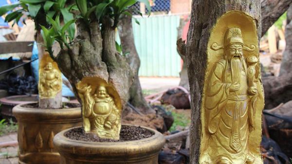 Kỳ lạ ở Cần Thơ: Tượng Phật Di Lặc hiện hình trên cây khế già khiến nhiều người kinh ngạc