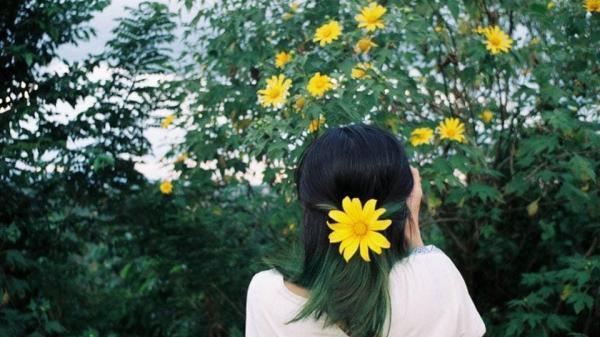 Ngay gần Bắc Ninh có một địa điểm ngắm hoa dã quỳ SIÊU ĐẸP, còn chờ đợi gì nữa mà không lên lịch đi ngay