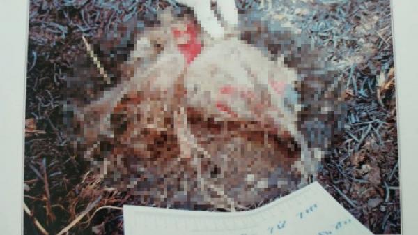 Tá hỏa phát hiện bộ xương người ch.ết bí ẩn ở bùng binh