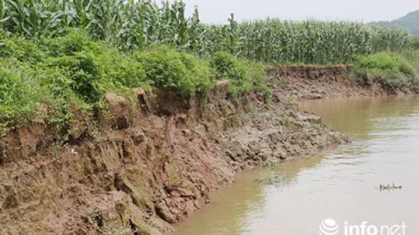 """Người dân Hải Dương, Quảng Ninh mất ruộng đất vì """"cát tặc"""""""
