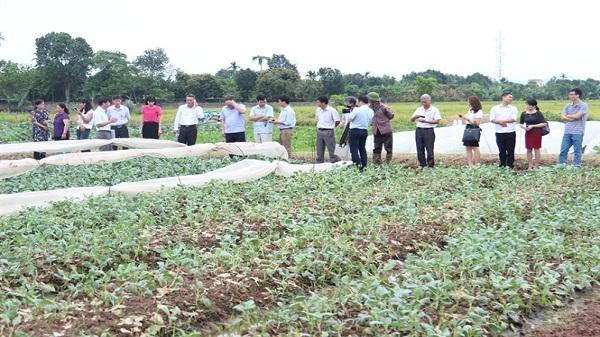 Trình diễn một số giống rau mới, có loại dự tính thu 1,9 tỷ đồng/ha
