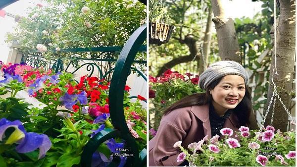 Ngẩn ngơ trước ban công hoa dạ yến thảo rực sắc của mẹ Hải Dương