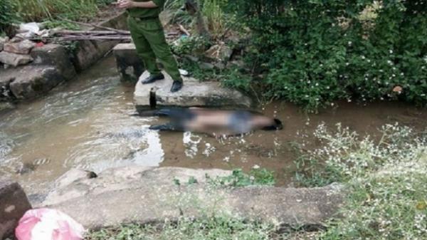 Hải Dương: Bàng hoàng phát hiện thi thể người đàn ông dưới mương nước