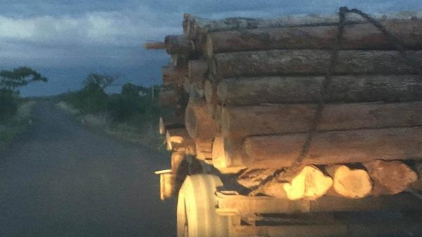 Hải Dương: Bắt 2 vụ vận chuyển gỗ sáng mồng 1 Tết