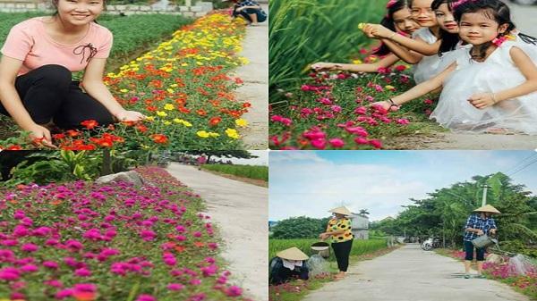 Tuyến đường Kinh Môn – Hải Dương bỗng rực rỡ hương sắc hoa tươi
