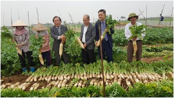 Hải Dương: Xây dựng nhà máy chế biến củ cải, chung tay gỡ khó cho nông dân