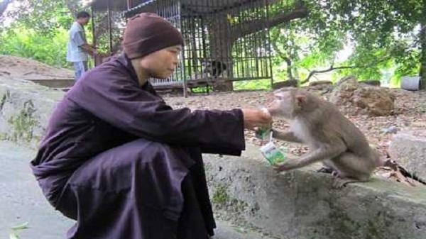 """Đa dạng loài khỉ ở """"khu đảo"""" Kinh Môn"""