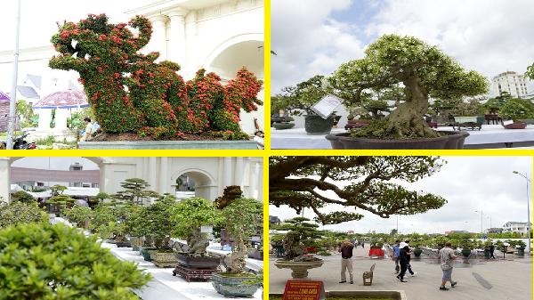 """Chiêm ngưỡng những cây """"độc"""" và lạ tại triển lãm sinh vật cảnh Hải Dương"""