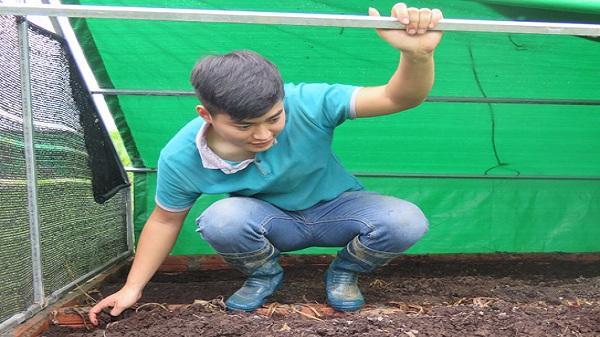 Chàng trai trẻ Hải Dương với niềm đam mê với nông nghiệp hữu cơ
