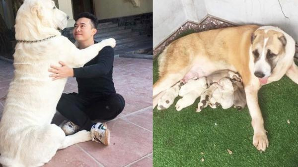 """Chó bố nặng gần 90 kg và đàn chó con hiếm ở Hải Dương """"gây sốt"""" mạng xã hội Việt"""