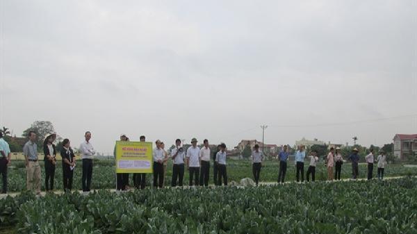 Liên kết '4 nhà' sản xuất rau xuất khẩu