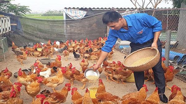 Hải Dương: Thanh niên nông thôn loay hoay khởi nghiệp ở làng