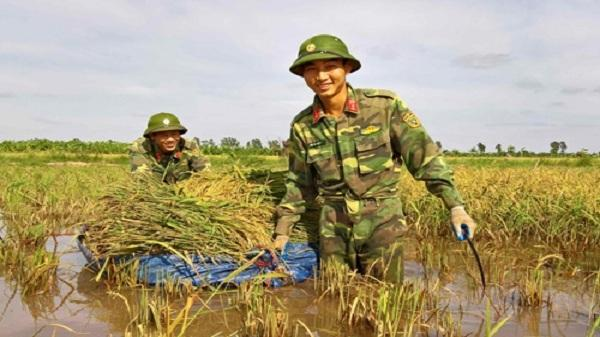 Hải Dương: Xúc động hình ảnh bộ đội dầm mình giúp dân gặt lúa