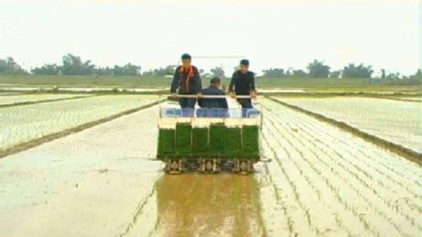 Huyện đầu tiên của Hải Dương đạt chuẩn nông thôn mới