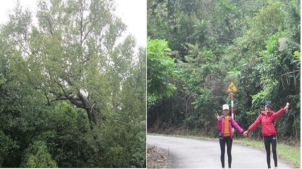 Đẹp lạ lùng cảnh sắc rừng phong Chí Linh mùa thay lá