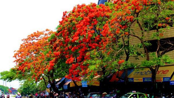 Bạn thực sự hiểu về thành phố hoa phượng đỏ?