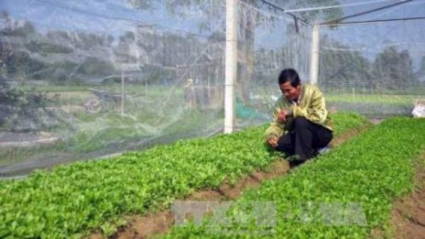 Tập đoàn công nghệ Hàn Quốc muốn hợp tác phát triển nông nghiệp với Cao Bằng