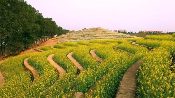 Ruộng hoa bậc thang 40.000 m2 giữa lòng Hà Nội