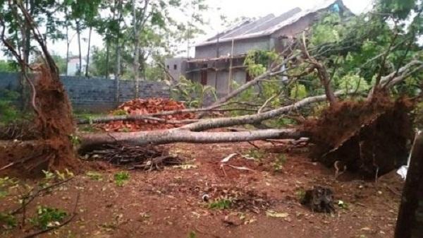Thanh Hóa: Lốc xoáy làm tốc mái nhà và hàng trăm cây xanh bật gốc