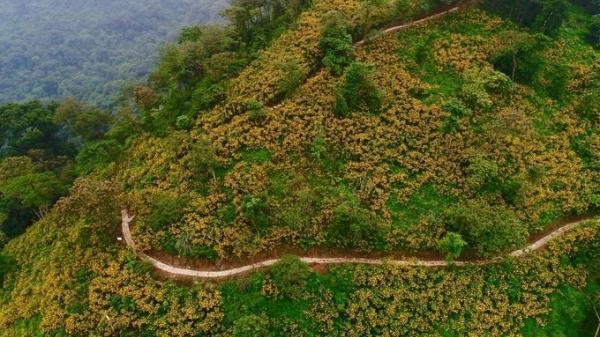 Hướng dẫn chi tiết lịch trình tham quan Vườn quốc gia Ba Vì mùa hoa dã quỳ nở rộ năm 2018