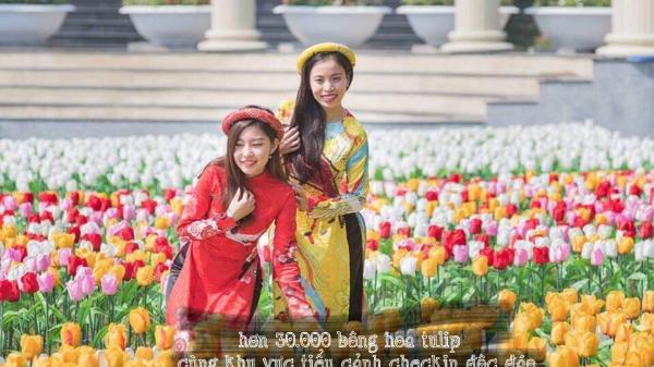 Không cần đi đâu xa, ngay tại Hải Phòng có một thiên đường hoa Tulip đang chờ đón bạn trong dịp giáp tết Kỷ Hợi!