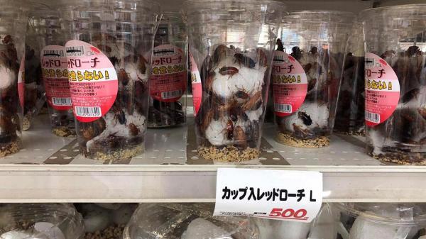 Ngạc nhiên chưa, tại Nhật gián được đóng gói bày bán với giá tương đương 100.000đ/hộp