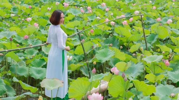 Cách Hà Nam không xa có một đầm sen 'mới toanh' đẹp xao xuyến khiến giới trẻ thích thú