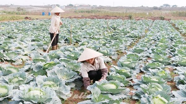 Cần những giải pháp đột phá cho ngành trồng trọt