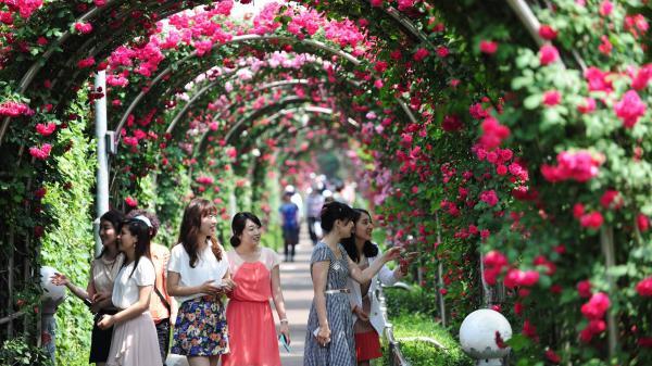 HOT: Ngay gần Hà Nam sắp có công viên hoa hồng rộng 22 ha