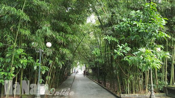 Về Hà Nam nghe câu chuyện về vườn trúc ngàn năm tuổi