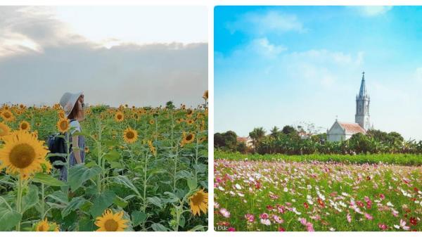 """Ngay gần Bắc Ninh có 1 thảo nguyên hoa đẹp lung linh như khu vườn cổ tích khiến giới trẻ """"phát cuồng"""""""