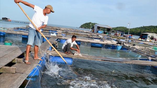 Kiên Giang: Có 1 xã đảo nuôi cá lãi hàng tỷ đồng mỗi năm