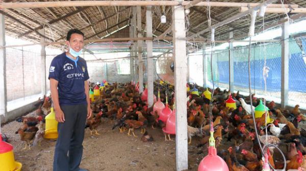 Sóc Trăng: Chàng trai 9X làm giàu với mô hình nuôi gà thả vườn