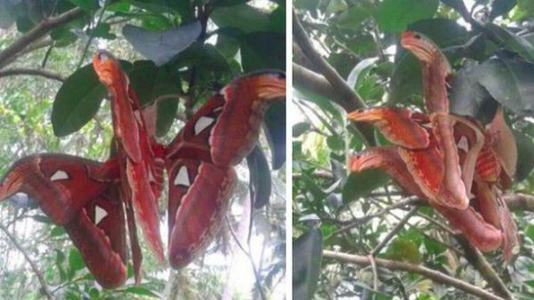 """Truy tìm nguồn gốc sinh vật giống """"rắn 3 đầu"""" đang gây bão cư dân mạng Việt Nam"""